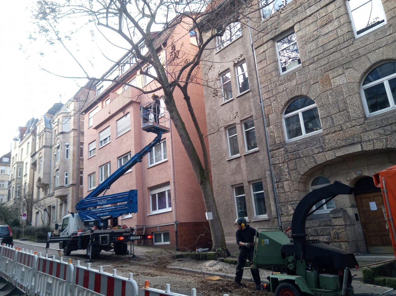 Baumpflege arbeiten in der Stadt